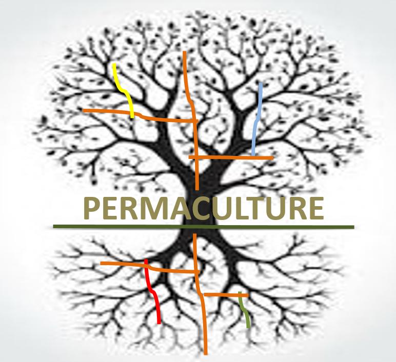 Permaculture แนวคิดที่เหมาะสมกับระบบนิเวศ